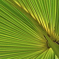Palm Leaf II by JD Grimes