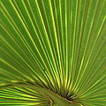 Palm Leaf by JD Grimes