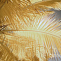 Palm Leaf by Keith Kapple