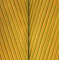 Palm Leaf Showing Midrib And Veination by Ingo Arndt