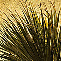 Palm Leaves 1 by Stuart Brown