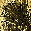 Palm Leaves 2 by Stuart Brown