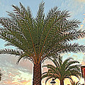 Palm On The Avenida by Alice Gipson
