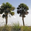 Palm Sea Oat Hill  by G Adam Orosco