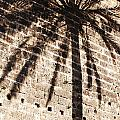 Palm Shadow by Agusti Pardo Rossello