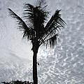 Palm Shadow by Rajesh Nagalingum Vythilingum