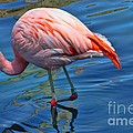 Palm Springs Flamingo by Tommy Anderson