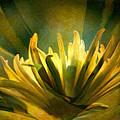 Palm Sunday by Trish Tritz
