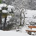 Palm Tree And A Bench With Snow by Mats Silvan