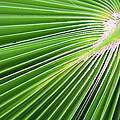 Palm Tree Frond by Roena King