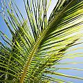 Palm Tree by Kati Finell