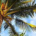 Palm Tree by Kenneth Sponsler