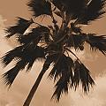 Palm Tree Leeward Oahu by Mark Gilman