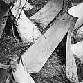 Palm Tree Macro by Adam Romanowicz