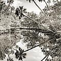 Palm Tree Reflections by Dustin K Ryan
