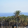 Palm Trees At Costa Del Sol Beach Spain by John Shiron