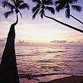 Palm Trees At Dusk by Axiom Photographic