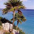 Palm Trees At Tulum by John Malone