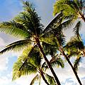 Palm Trees At Twilight by Joe Carini