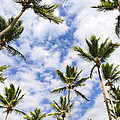 Palm Trees by Elena Elisseeva