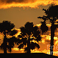Palm Trees In Sunrise by Susanne Van Hulst