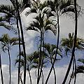 Palm Trees Oahu by Mark Gilman