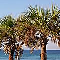 Palm Trees by Sandy Keeton