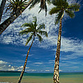 Palm Trees by Simone Pastore