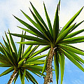 Palm Trees by Design Windmill