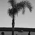 Palm Walk by Jez C Self