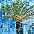Palme Tree And Blue Building by Ray Laskowitz