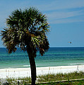 Palmetto And The Beach by Susanne Van Hulst