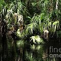 Palmettoes In The River by Theresa Willingham