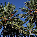 Palms 9838b by Gary Gingrich Galleries