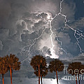 Palms And Lightning  by Stephen Whalen