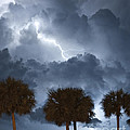 Palms And Lightning 5 by Stephen Whalen