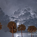 Palms And Lightning 7 by Stephen Whalen