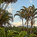 Palms In Costa Rica by Madeline Ellis
