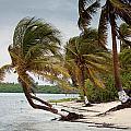 Windblown Palms by Jean Noren