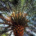 Palms by Art Dingo