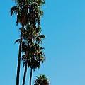 Palms Over Oak by Eric Tressler