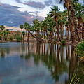 Palms Trees Over Papago Lake by Dave Dilli