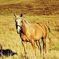 Palomino Horse by Peggy Leyva Conley