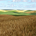 Palouse Rolling Hills by Photos by By Deb Alperin