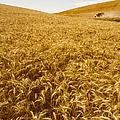 Palouse Wheat by Photo Researchers