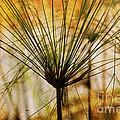 Pampas Grass by Susanne Van Hulst