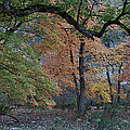 Panorama Of Fall Colors At Lost Maples by James Woody