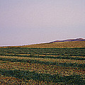Panoramic View Of An Alfalfa Field by Kenneth Garrett