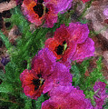 Pansies Painting by Don Wright