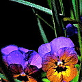 Pansy 5 by Pamela Cooper
